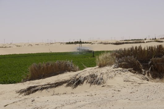 El Oued sustainable water use for potato production project 2017 - 2019