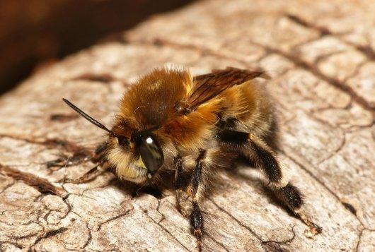 Report on curbing decline of (wild) pollinators