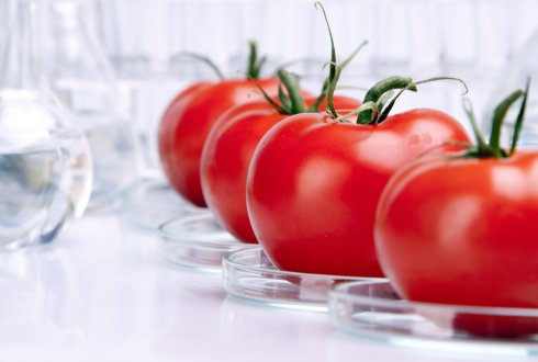 Identification of metabolites involved in heat stress response in different tomato genotypes