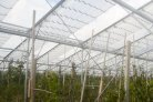 Innovative 'convertible cover' is open for protected apple cultivation