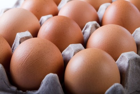 Prediction of transfer and half-life of pesticides/biocides in eggs