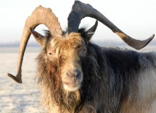 CGN Dutch animal species and breed information