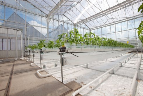 Workshop Smart materials for greenhouses