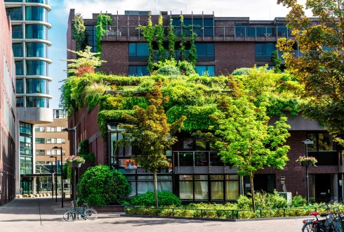 The effect of urban green infrastructure on local microclimate and human thermal comfort