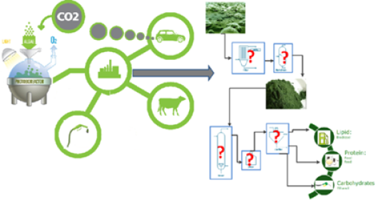 thesis on microalgae
