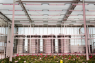 Sustainable cultivation in the greenhouse: higher production, lower footprint
