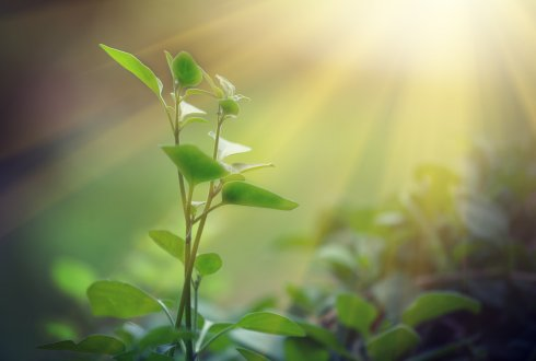 Photosynthesis needs tuning - The solution lies under the plant's bonnet