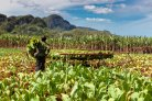 Climate smart agriculture in Cuba