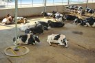New perspectives on cow management