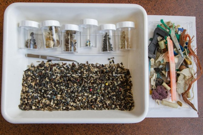 Small debris collected from a 50cm wideby 5 m long stretch of tideline on Texel on 14 May 2014 (the jars contain partially sorted different types of industrial pellets, but also lumps of paraffin, plant-seeds and pumice) (© Jan Andries van Franeker)