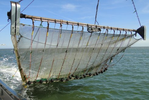 Catch composition and innovation in pulse fishery for shrimp
