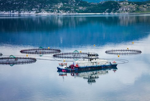 Sustainable fish farming saves the environment