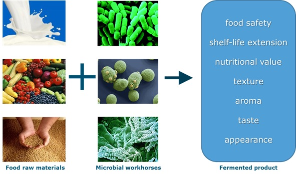 a research on fermentation of foods A clinical review of the research conducted on fermented foods and probiotics concluded that they have the ability to help treat symptoms associated with inflammatory bowel disease, crohn's disease, cancer, inflammation, arthritis, hypertension, hyperlipidemia, liver disease, and other disorders (parvez et al, 2006.