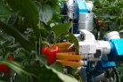 Cognitive Robots for Flexible Agro Food Technology (Flexcraft)
