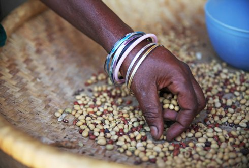 Social enterprises can help improve food security in developing and crisis-affected regions