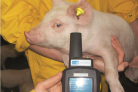 Smart systems in pig production: greater efficiency and transparency