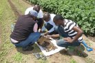 From knowledge to transformation: potato training program in Tanzania