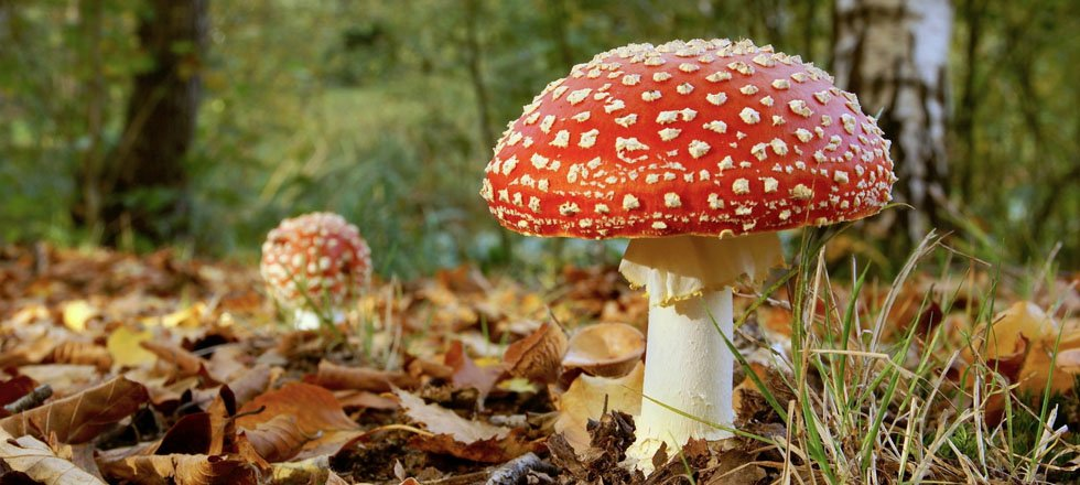 mushroom, Forest and nature conservation
