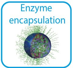 Enzyme encapsulation