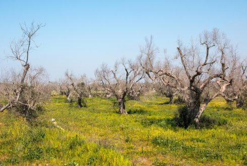 Ten questions about Xylella fastidiosa