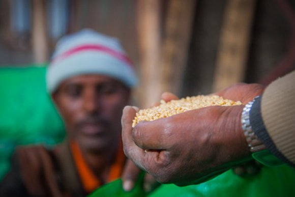 Sowing prosperity in Ethiopia
