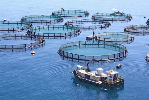 'Apply the principles of closed loop agriculture in aquaculture'