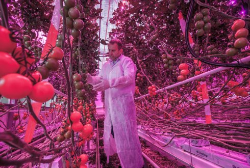 LED lighting improves yield and reduces carbon footprint of greenhouse horticulture