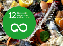 SDG goal: Responsible consumption and production
