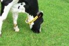 Aandacht voor dier en gezondheid_dairy Campus