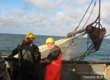 Beam Trawl Survey (BTS)