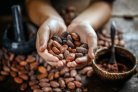 Following cocoa beans to chocolate: The search for intrinsic characteristics