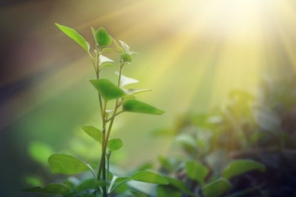 Optimized photosynthesis: One step closer to crops with twice the yield