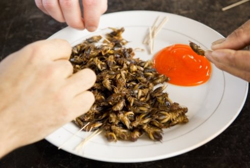 The Edible Insect Workshop