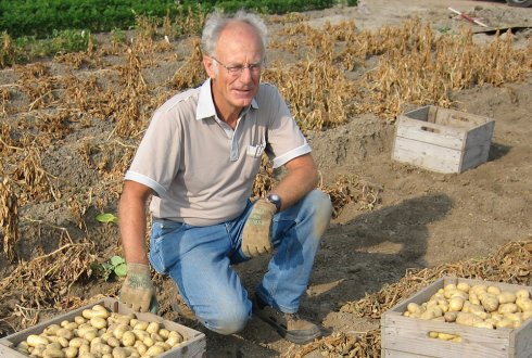 How the Netherlands got good at breeding spuds