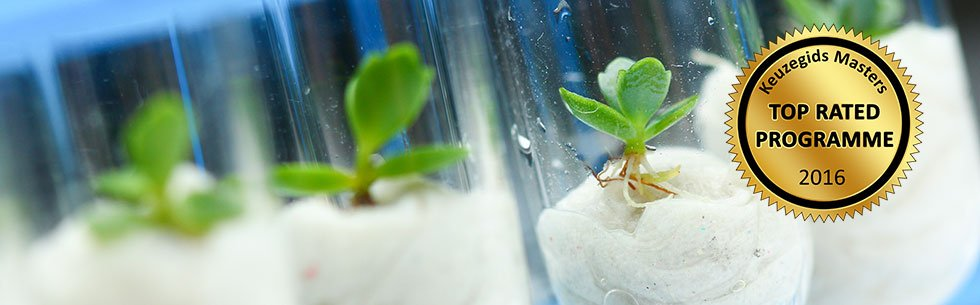 plant biotechnology thesis