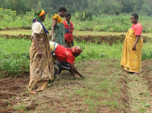 A women group working on their onion field: women have a crucial role in the PIP approach