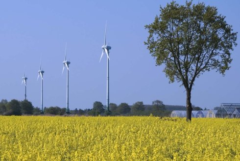 rapeseed and windmills
