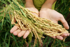 Webinar: Do we need new visions on food security?
