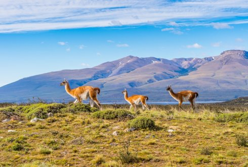 Livestock farming systems on South American native grasslands: When production meets conservation