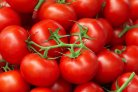 Development of an inspection module for quality assurance of tomatoes on the vine
