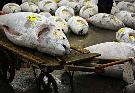 A Seafood Traceability System for Indonesian Tuna Supply Chains