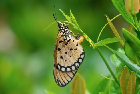 "WEES: ""From sex chromosomes to sex determination in Lepidoptera"""