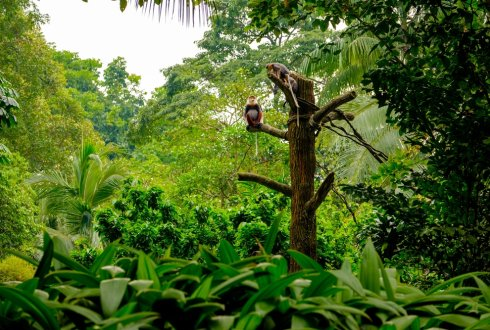 Poaching in tropical forests is bad for carbon storage