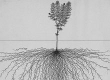 Root System Drawings