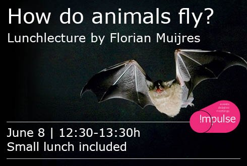 How do animals fly?