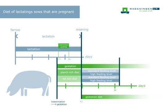 Diet of lactating sows that are pregnant