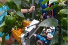 CROPS - Clever Robots for Crops