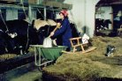 The Modernization of Dutch Agriculture in Films