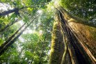 Plant diversity is a key factor to the resilience of Amazon forests