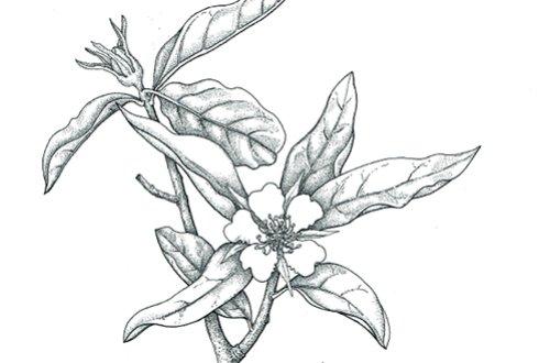 Workshop Hoe teken je een plant van de toekomst bij open huis ...
